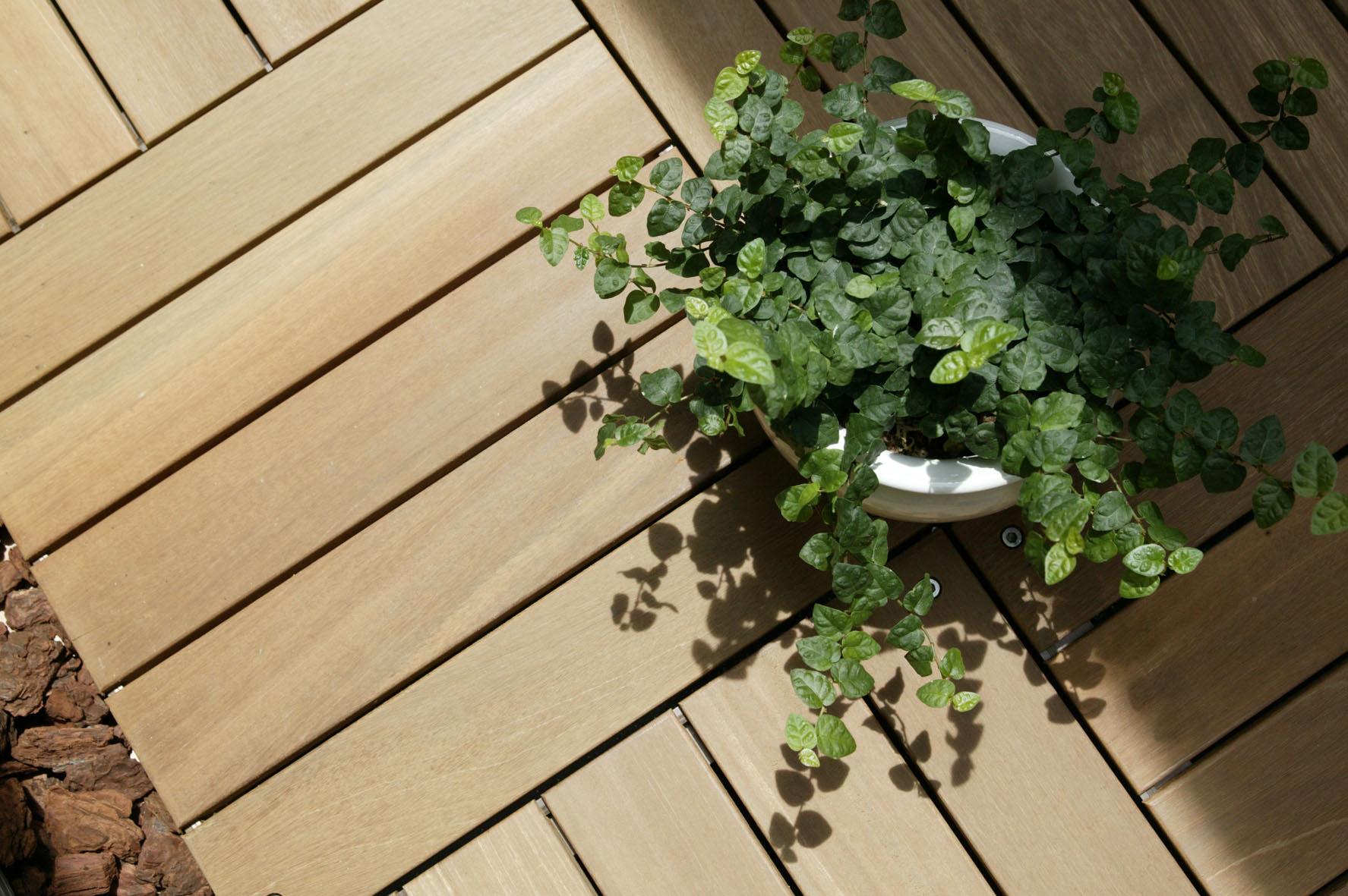 \彩り豊かな春を楽しもう/ 室内でも楽しめるインテリアグリーン